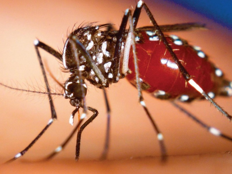 Confirman 211 casos de Dengue en Nayarit