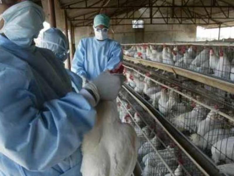 Confirman en China primer caso de gripe aviar H10N3