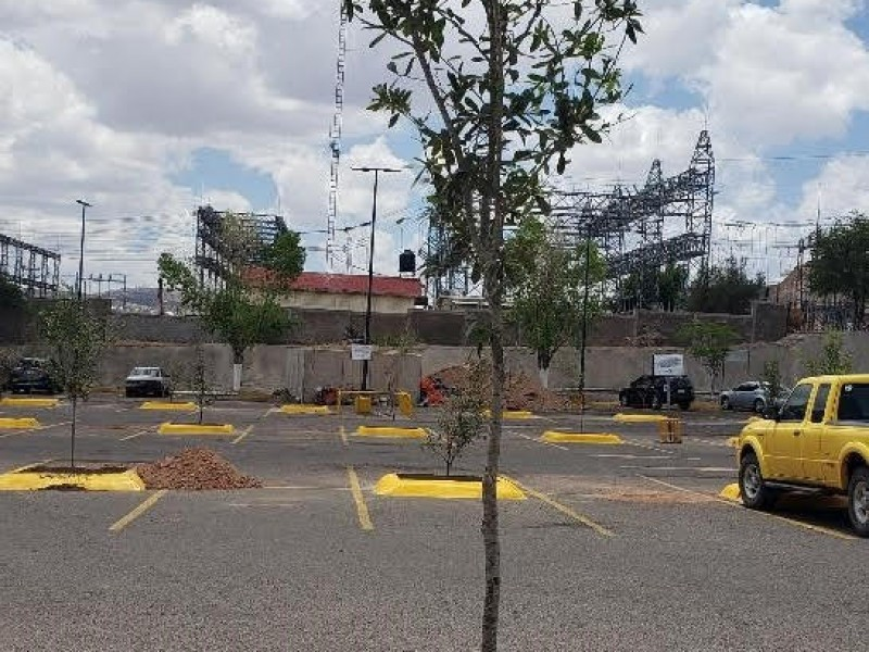 Conmemoran el día del árbol donando plantas nativas de Nogales