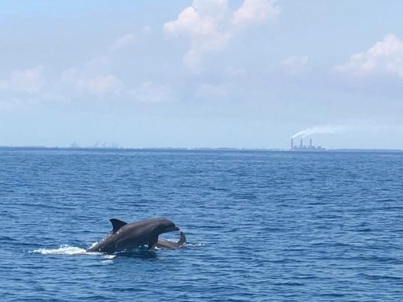 Contaminación del mar, principal amenaza de delfines