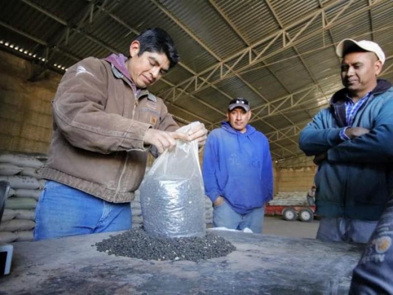 Continua acopio de frijol en Zacatecas