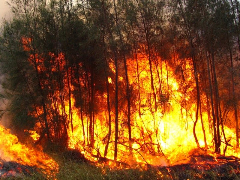 Continúa combate de incendios forestales