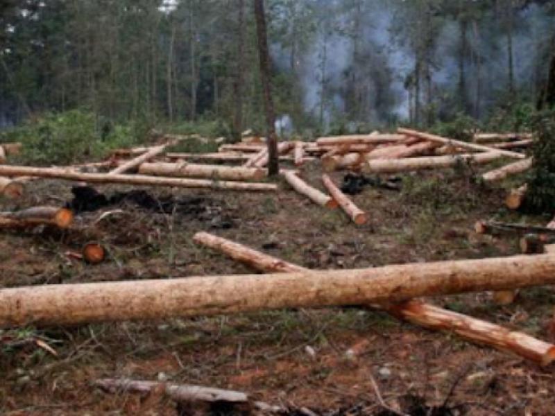 Continúa la tala indiscriminada en Chiapas