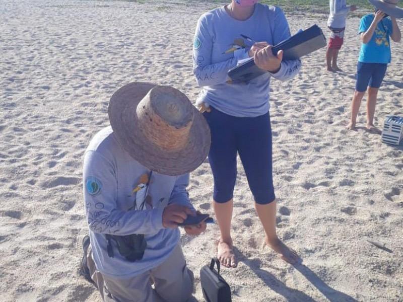 Continúa monitoreo del gallito marino