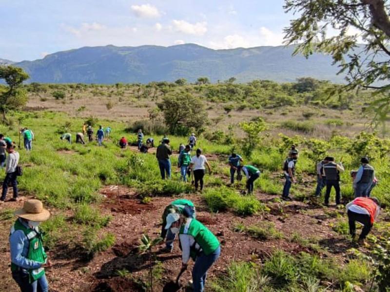 Continúa reforestación para rescatar al Cañón del Sumidero