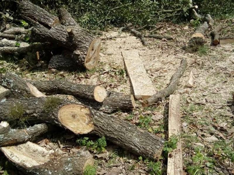 Continúa tala inmoderada en Chiapas