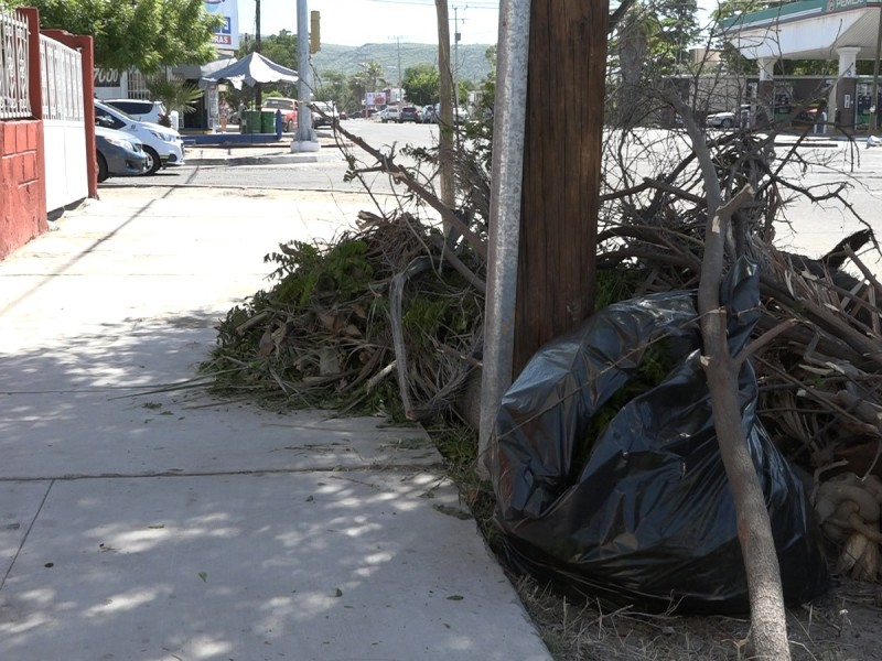 Continúan jornadas de limpieza en La Paz