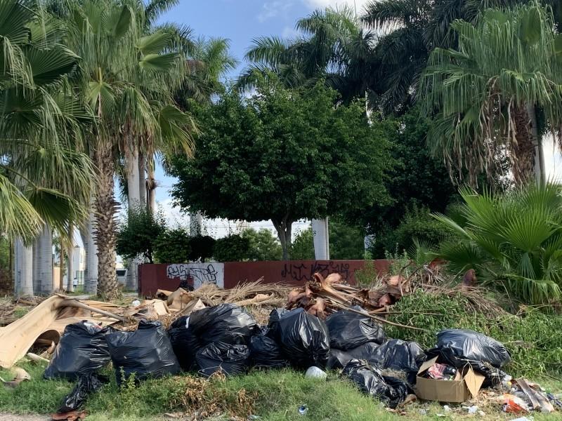 Continúan las fallas en la recolección de basura