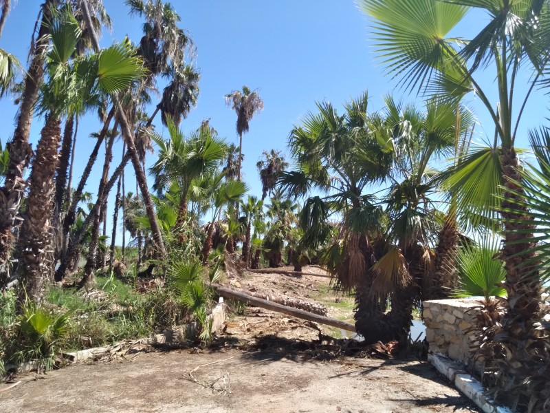Continuarán autoridades con programas de conservación del estero