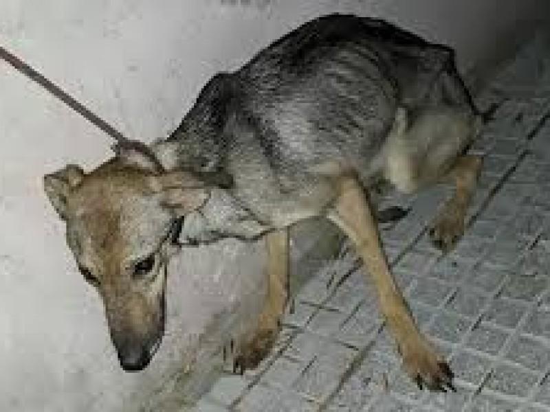 Vacío legal impide que maltratadores de animales reciban sanciones
