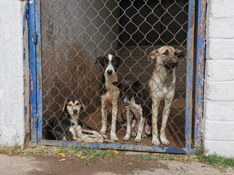 Control y Bienestar Animal invita a jornada de esterilización
