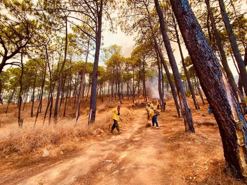 Tras 20 horas, controlan incendio en Cerro de la Cruz