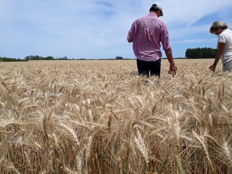 Controlarán 'coyotaje' en desarrollo de cultivos de avena y trigo
