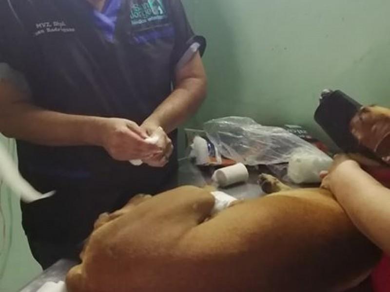 Piden ayuda para animales rescatados