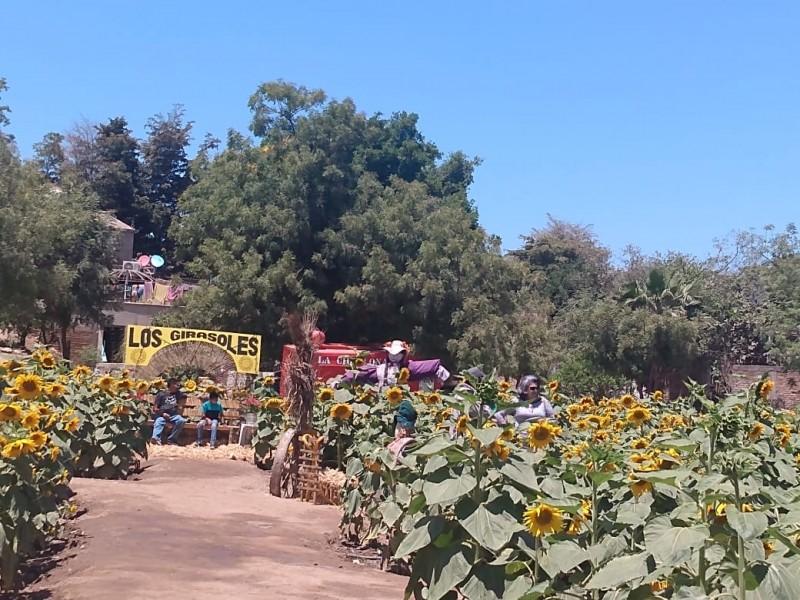 Corredor Los Girasoles, en Guasave, atrae a turismo