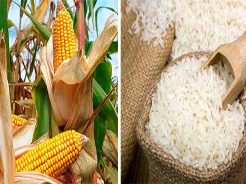 Cosecha nacional de granos disminuye hasta un 30% en 2020