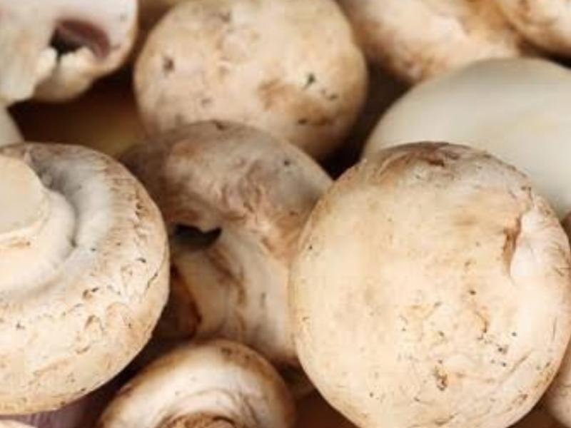 Crece interés por cultivar hongos comestibles