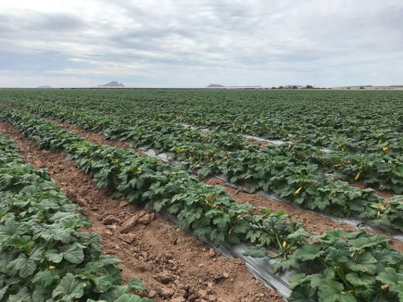 Crece la exportación de productos agrícolas sonorenses