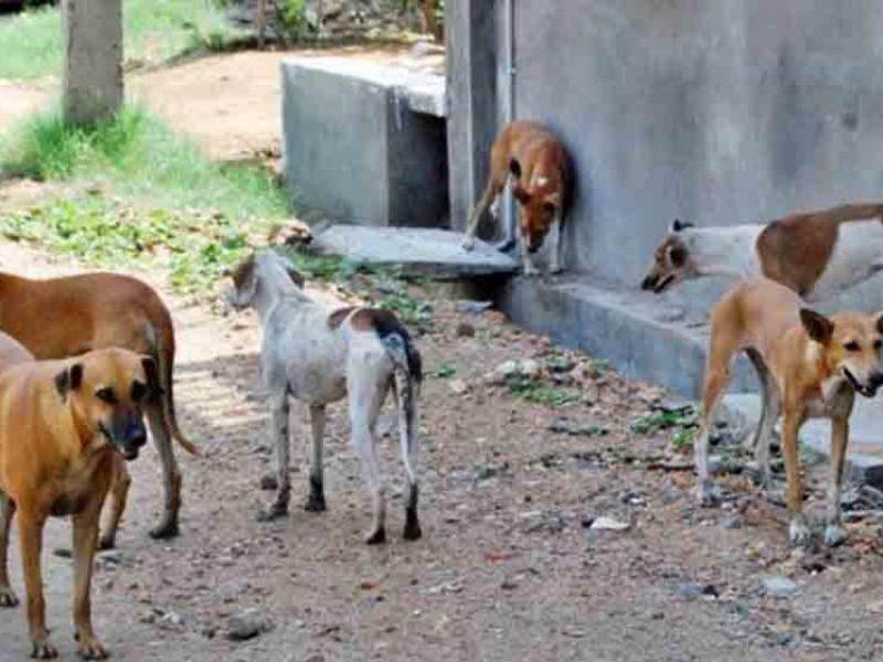 Crece población animal en las calles por pandemia