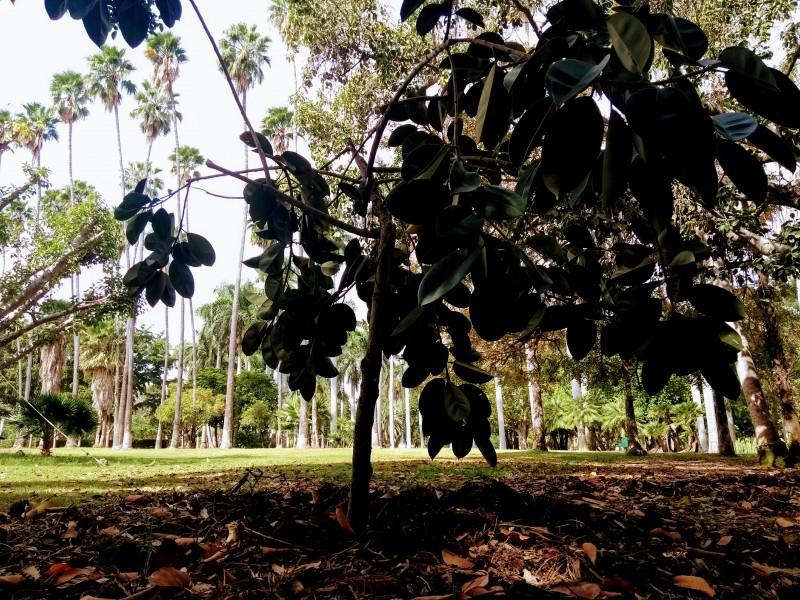 Crece reserva botánica del jardín BFJ