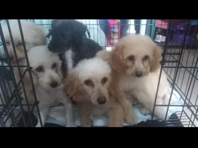 Crisis económica genera mayor abandono de mascotas