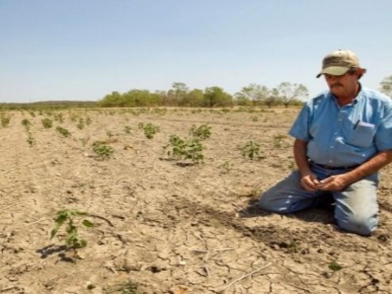 Crisis en campo veracruzano por sequía