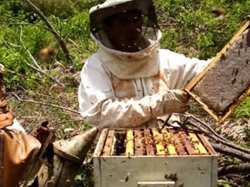 Crisis en el sector apicultor en Chiapas
