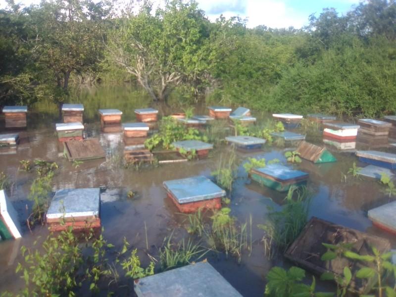 Cuantifican apicultores de zona norte 56 millones de abejas perdidas