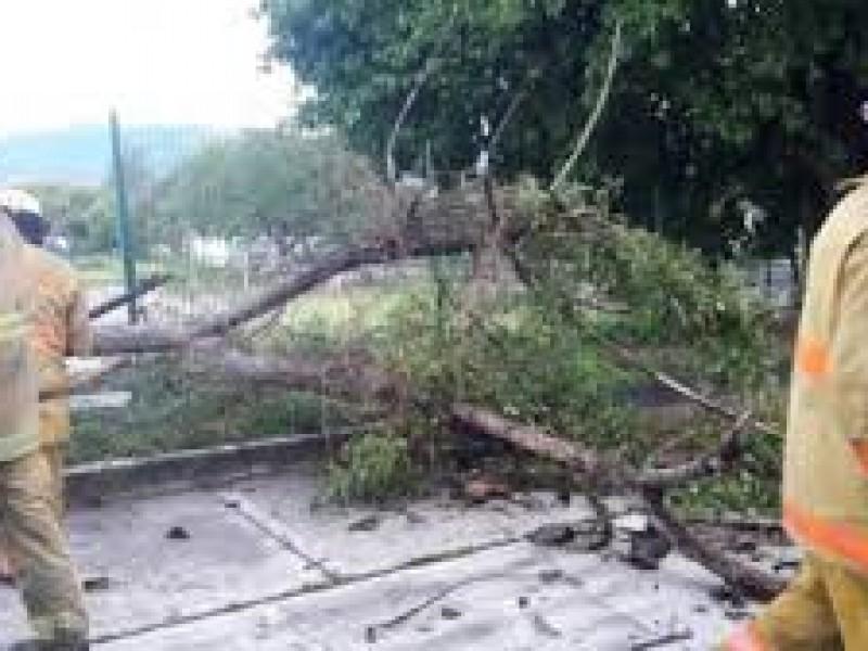Cuenca del Papaloapan zona más afectada por lluvias
