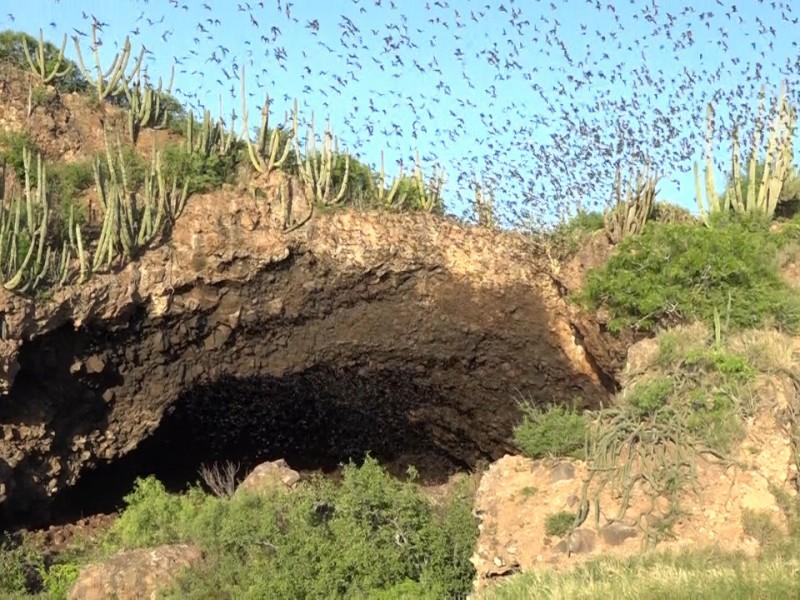 Cueva de los murciélagos ofrece espectáculo natural a visitantes