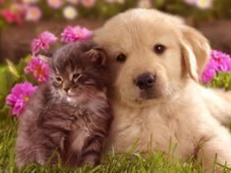 Dan recomendaciones para Cuidado de los animales de compañía