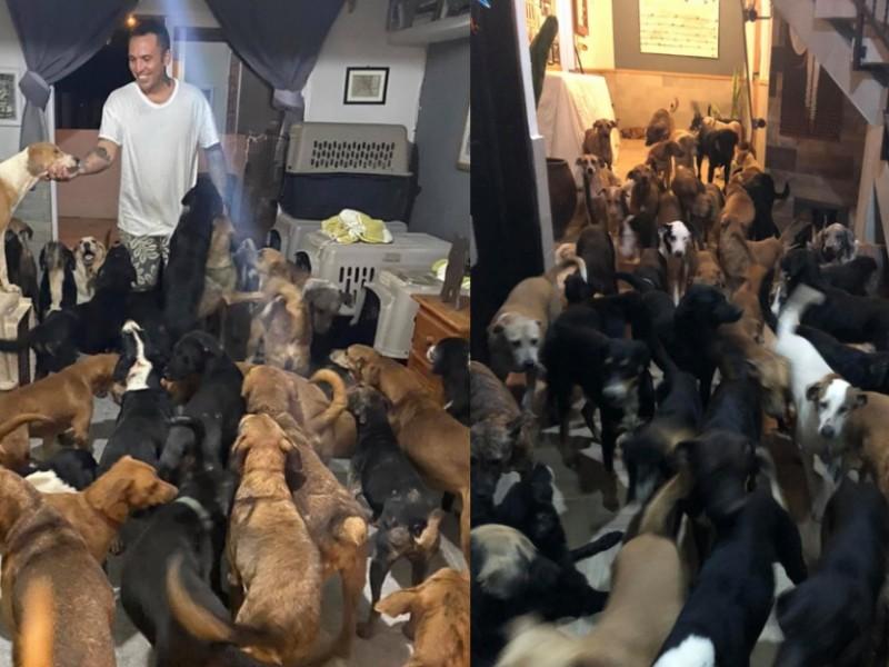 Da refugio a 300 perritos para salvarlos del huracán Delta