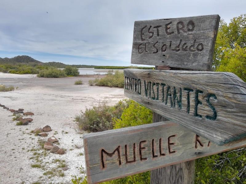 Dan mantenimiento a zonas ecológicas de Sonora