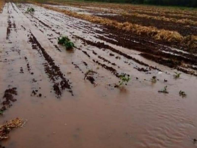 Daños por lluvias en zona norte no han sido cuantificados