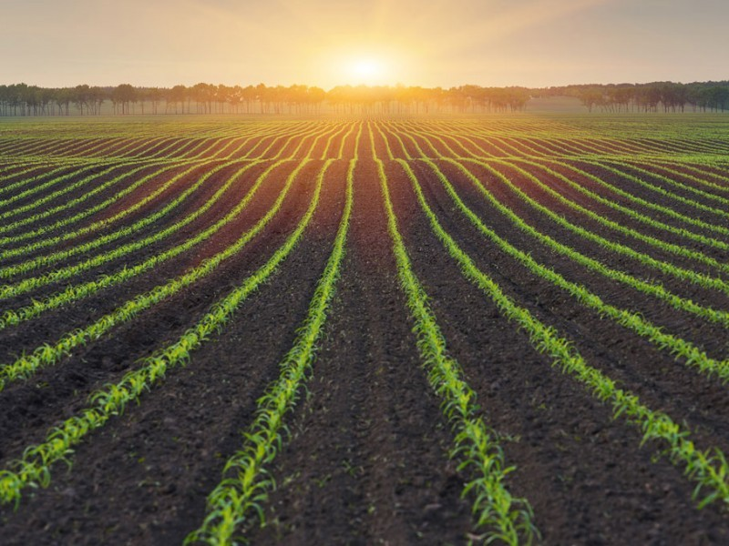 De nuevo, agricultura comercial viene en ceros