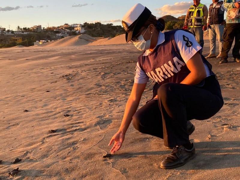 Décimo Segunda Zona Naval y sociedad civil liberan tortugas golfinas