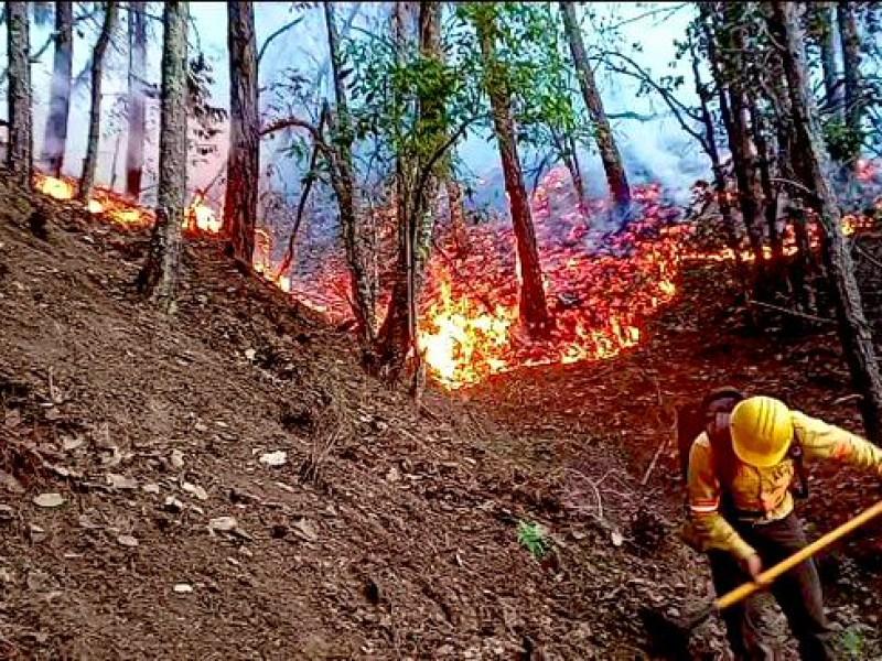 Declaran 13 municipios en emergencia por incendios forestales