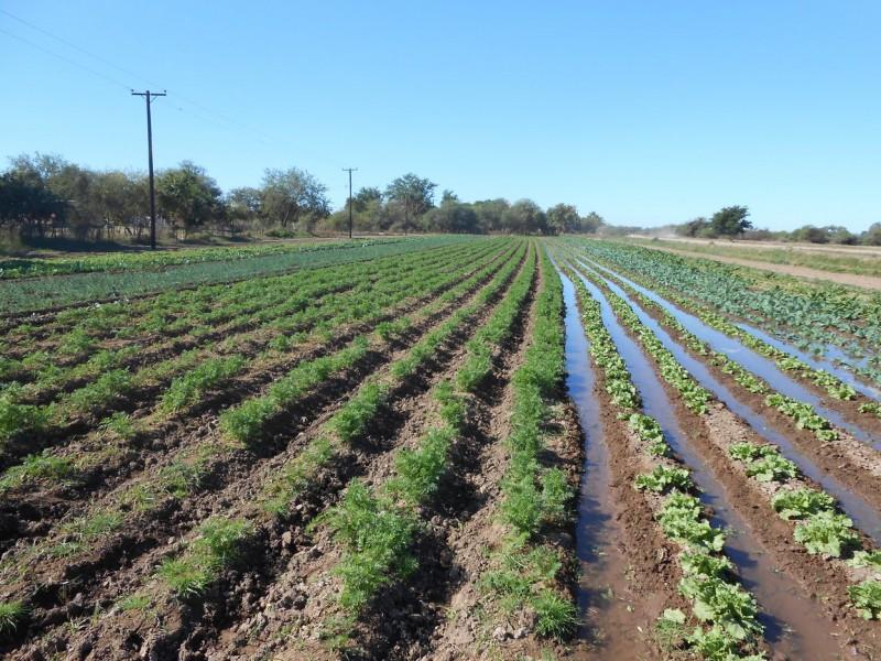 Declaratoria de emergencia por sequía no aplica en agricultura