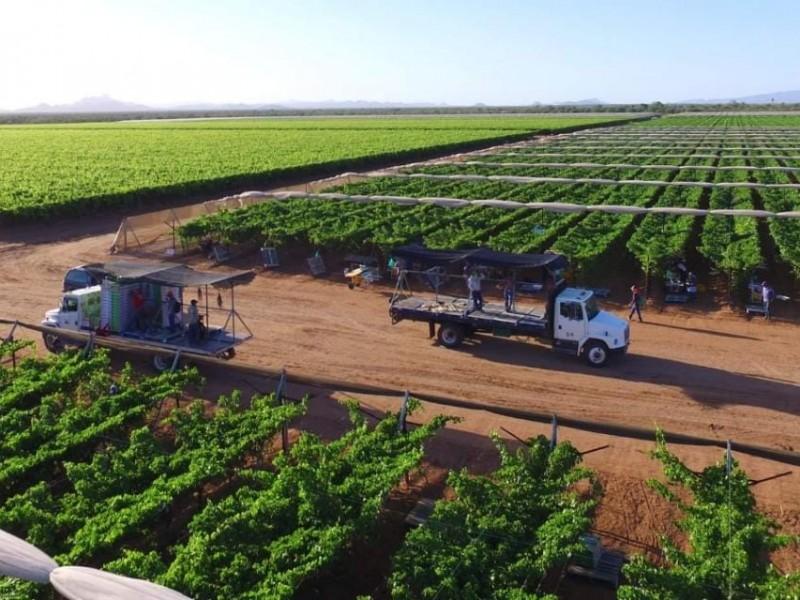 Déficit de personal en campos agrícolas por inseguridad