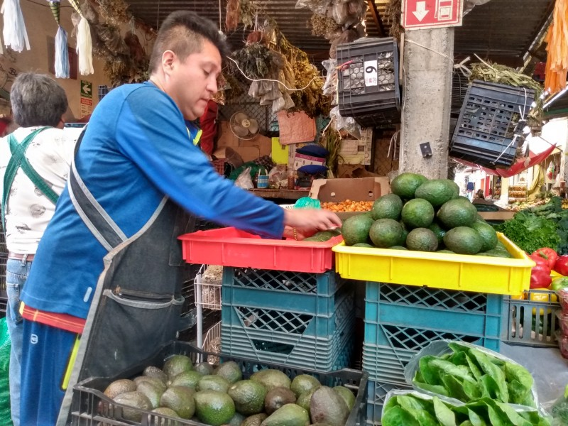 Déficit en apoyos a productores de aguacate mexiquense