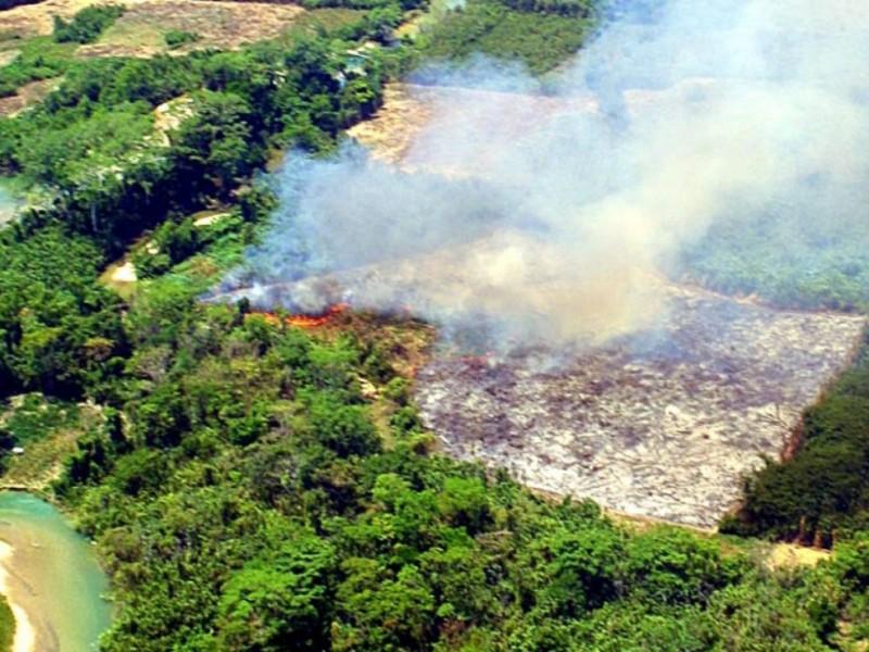 Deforestación e invasiones devastan 40mil hectáreas en Selva Lacandona