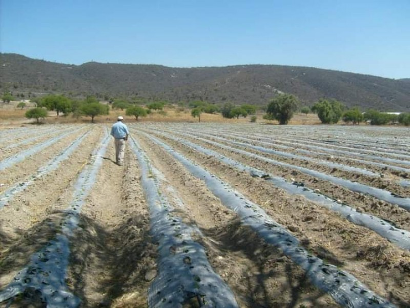 Deja afectaciones en campos de sierra negra avioneta antigranizo