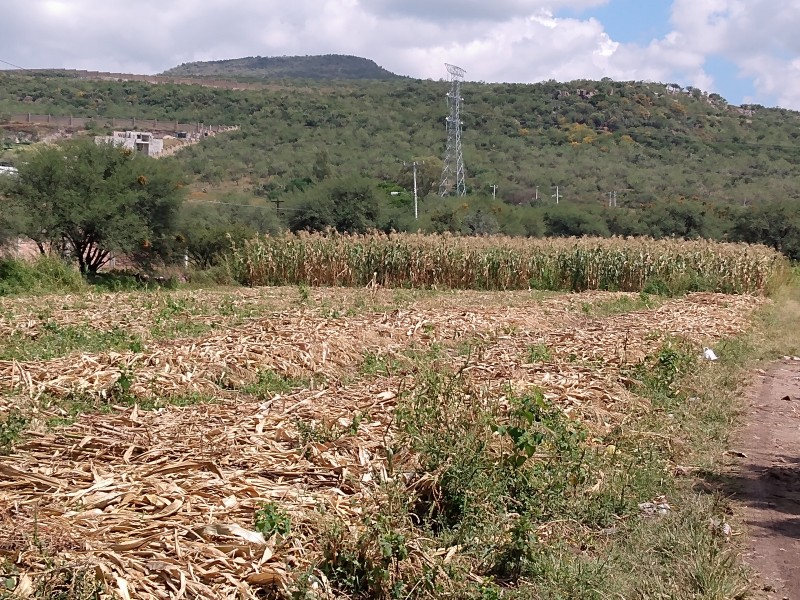 Delincuencia impacta en el campo; roban cosecha