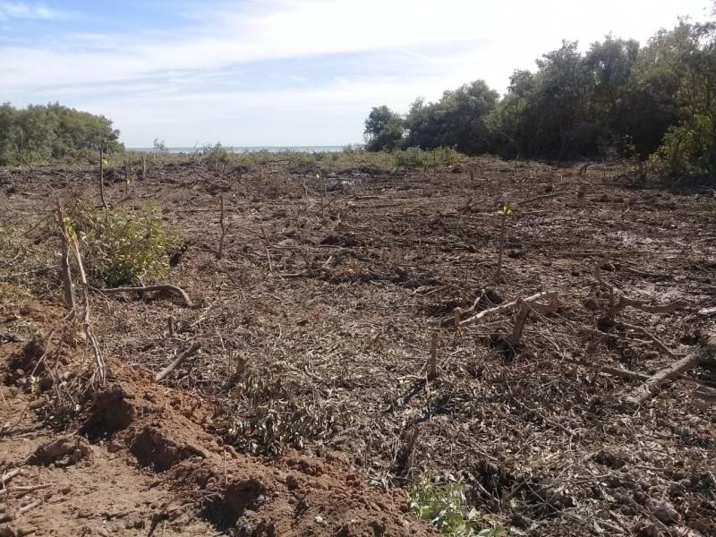 Demandan pescadores reparar daños por tala de mangle
