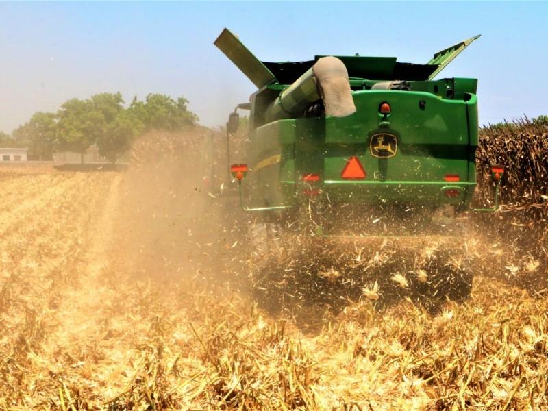 Demandan vigilancia para evitar robo hormiga de maíz