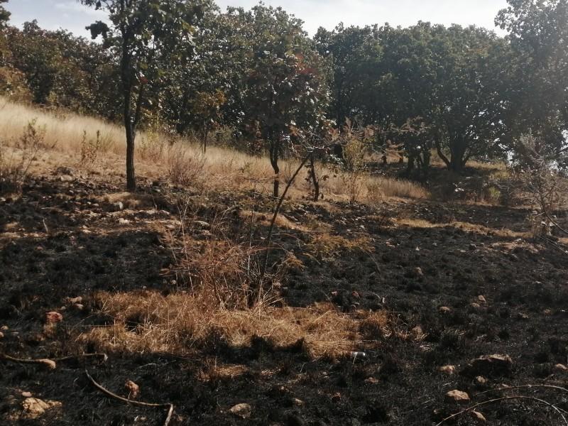 Denuncia Zapopan ante Fiscalía 3 incendios en Bosque El Nixticuil
