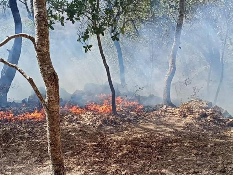 Denuncian afectaciones de incendio entre SAMAO y San Pedro Lagunillas