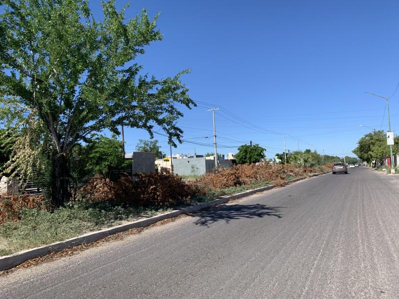 Denuncian basura sobre camellón en bulevar Santa Bárbara