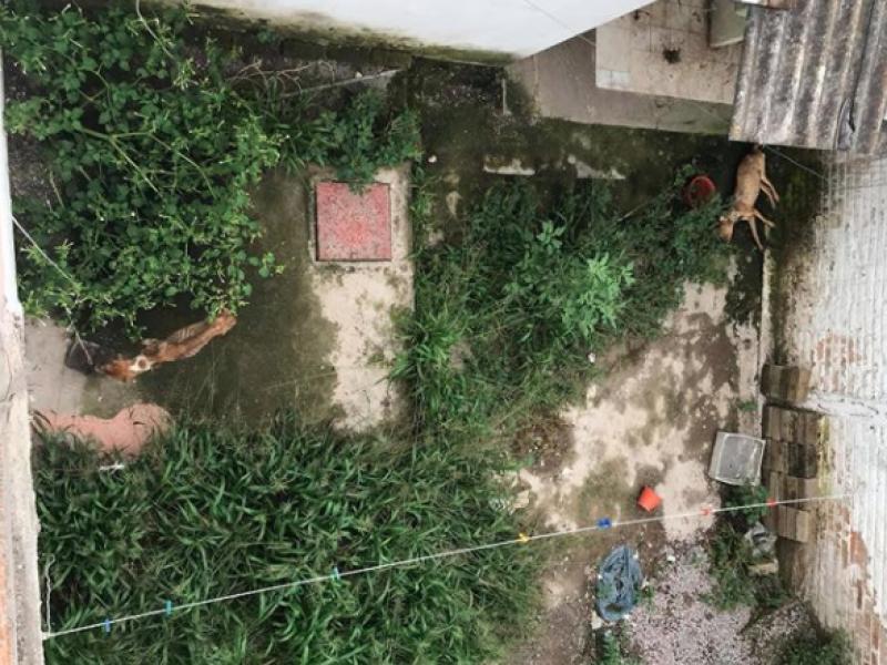 Denuncian caso de crueldad animal en INFONAVIT El Mirador