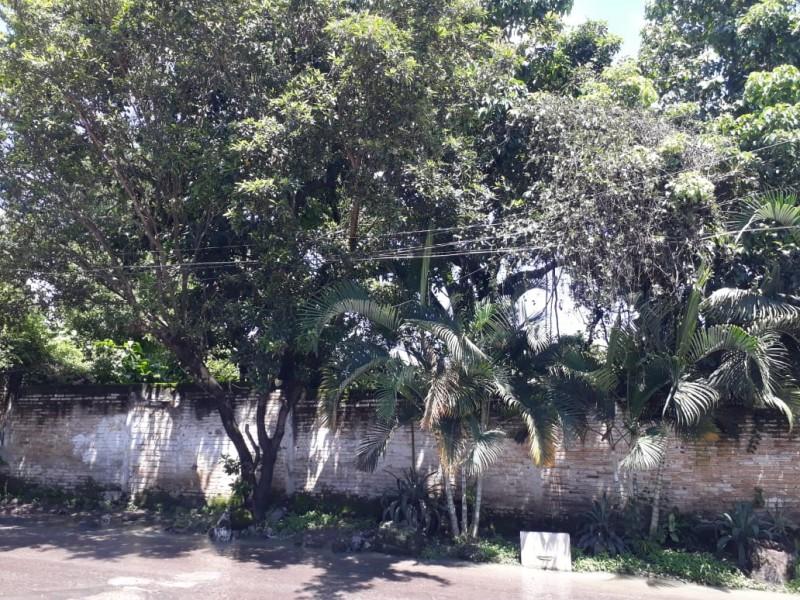 Denuncian ciudadanos cableado devorado por árboles que provocan cortocircuitos